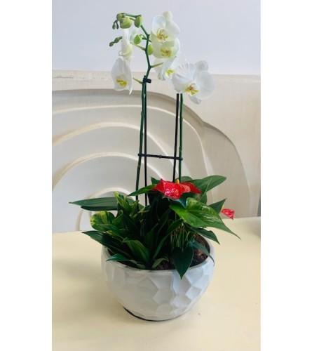 XL Modern Orchid Planter