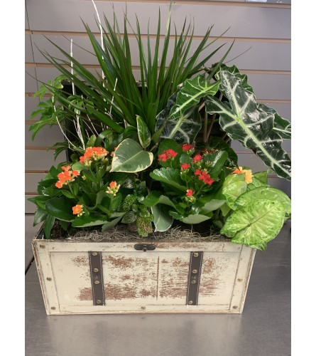 Chest of plants
