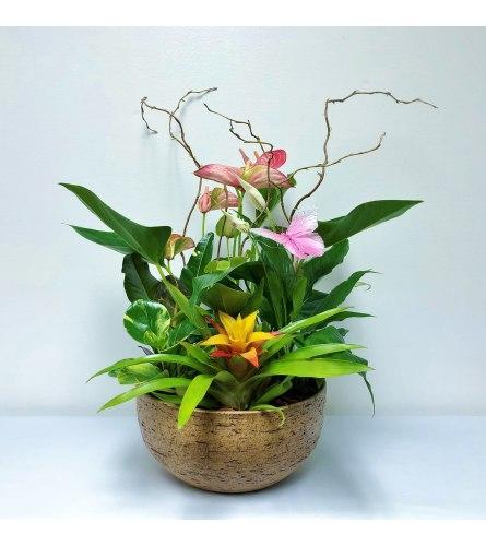 Anthurium and Bromeliad Planter