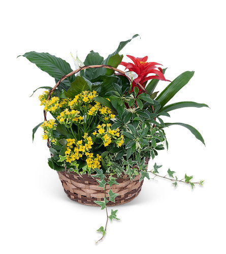 Blooming Dish Garden Planter