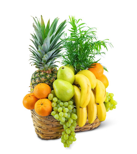 Green Goodness Fruit & Plant Basket - Gift Basket