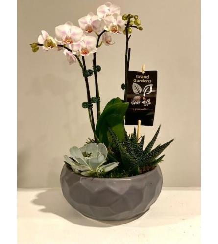grey planter with Orchid plant and succulents
