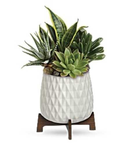 Mid Mod Succulents