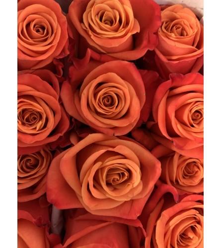 Fabulous orange roses