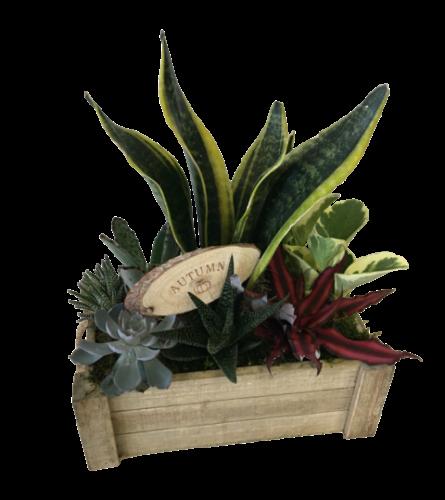 Autumn Crate of Succulents