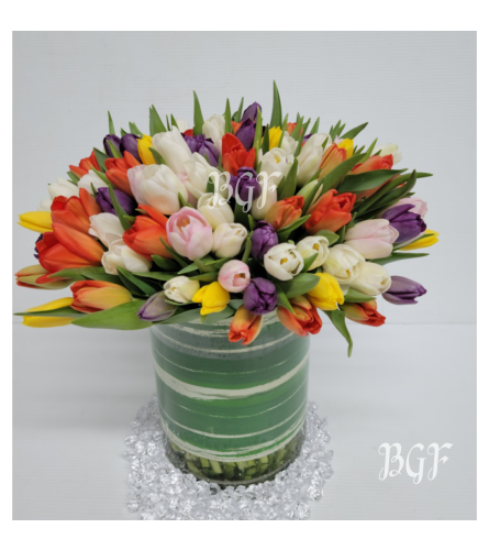 Grand Elegance Tulips