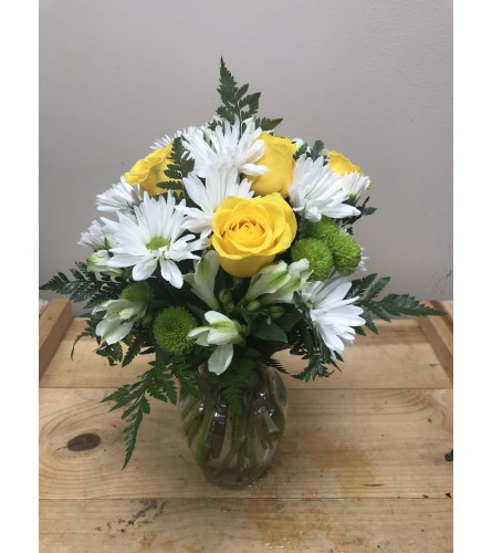 Daisy Day Surprise
