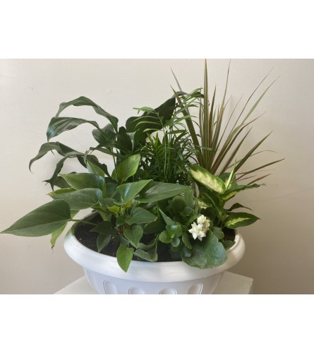 """Large Dish Garden with mixed tropical plants 10"""" pot"""