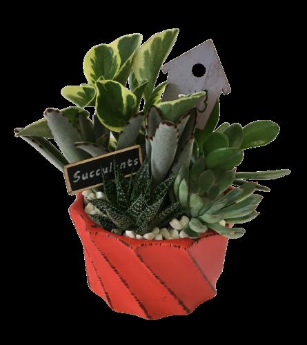 Orange Twist Succulent Planter