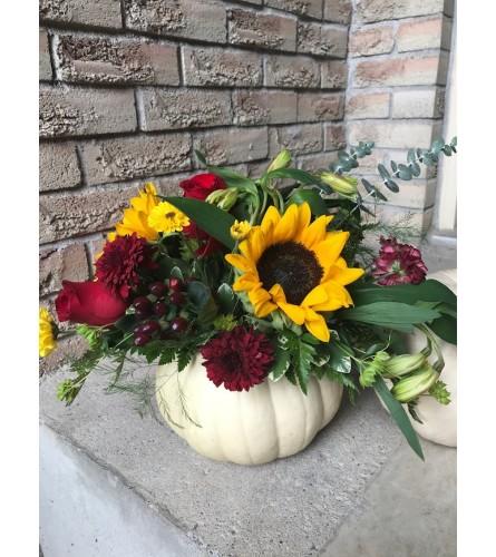 sunflower pumpkin 1