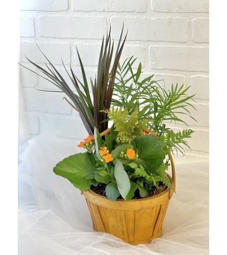 Wooden Basket Tropical Dish Garden