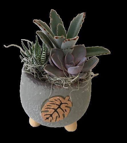 Succulent Leaf Planter