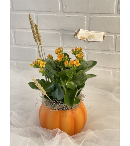 Pumpkin Flowering Planter