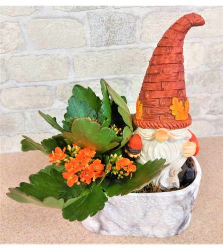 Kalanchoe and Gnome by O'Flowers
