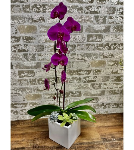 outstanding orchid
