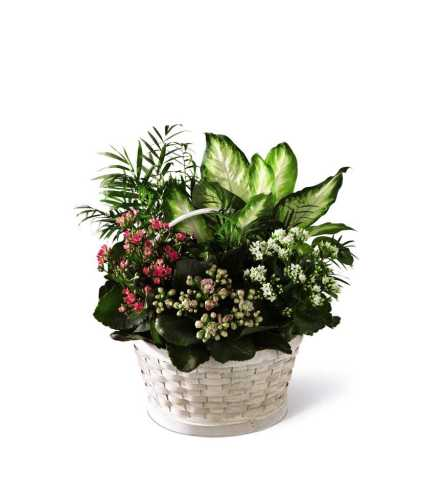 The FTD® Rural Beauty™ Dishgarden