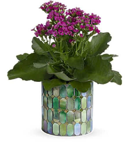 Teleflora's Memorable Mosaic Plant