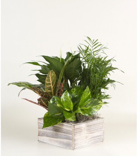 Plant Garden in Wooden Box