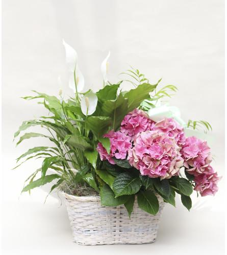 Spring Plant Trio