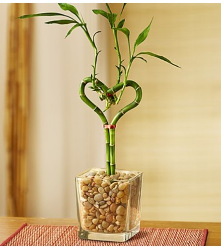 Heart Shaped Bamboo