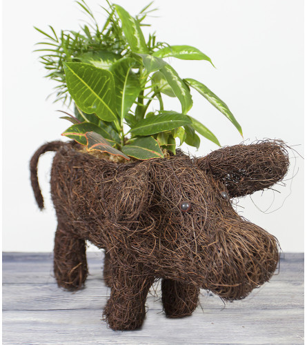 Little Cow Planter