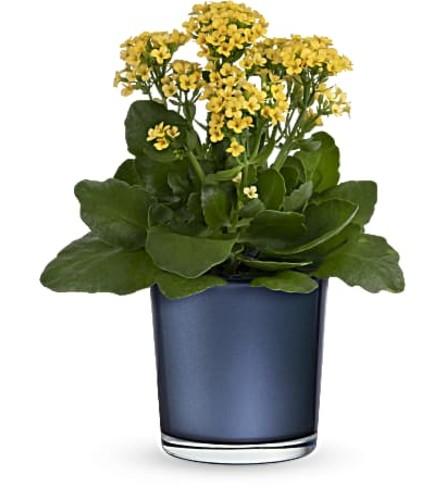 Teleflora's Golden Morning Plant
