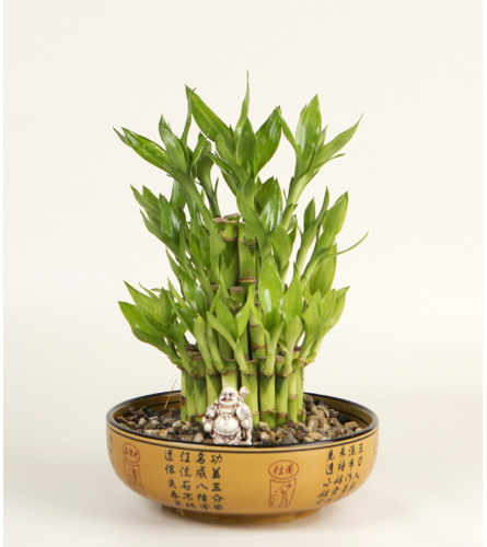 Bamboo Plant with Buddha