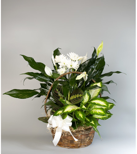 Euro Basket with Spray Mums
