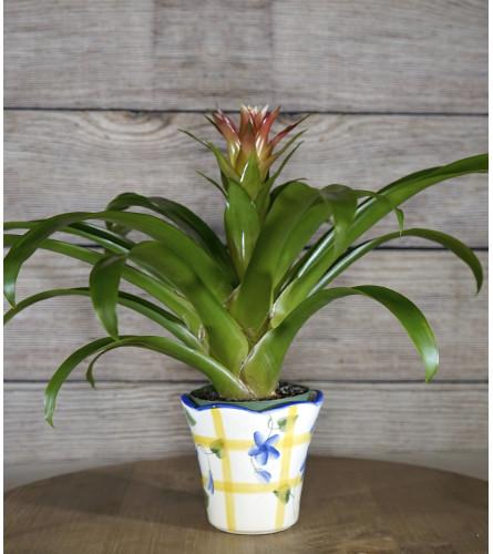 Decorative Bromeliad Planter
