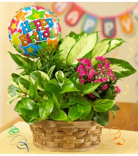 Happy Birthday Blooming Dish Garden