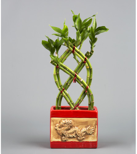 Dragon Ceramic Bamboo