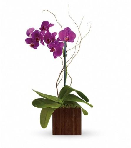 Teleflora's Bamboo Elegance
