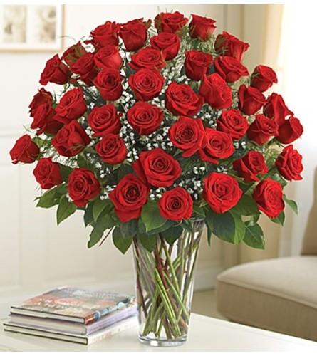 Ultimate Elegance - 4 dozen roses