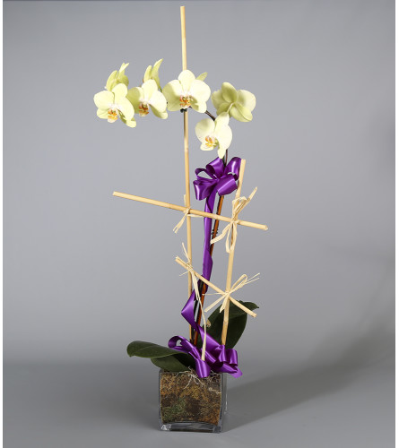 Country Arts Orchid