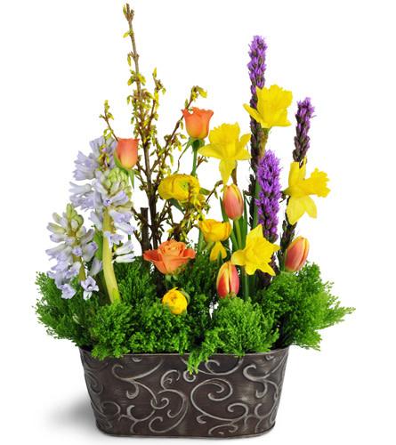 Gardener's Delight