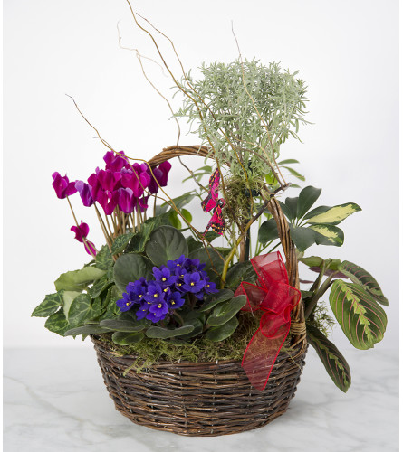 Assorted Plant Basket