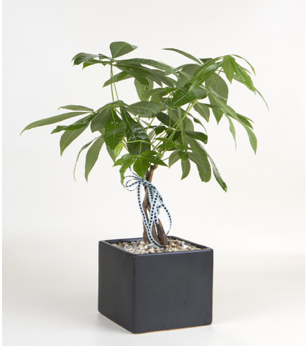 Decorative Money Tree