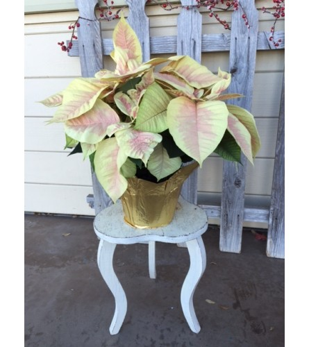 Glamour Holiday Poinsettia