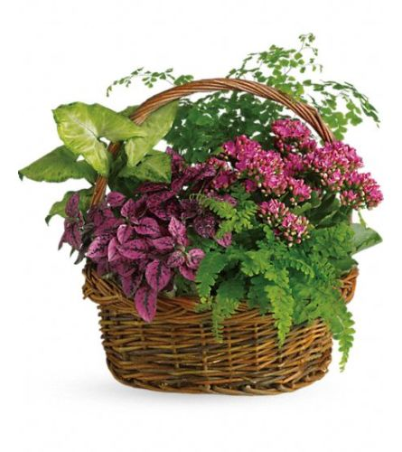 Secret Garden Basket TF