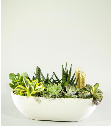 Sweetly Succulents