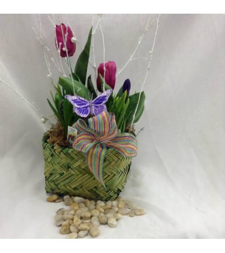 Spring Mixed Bulb Pot