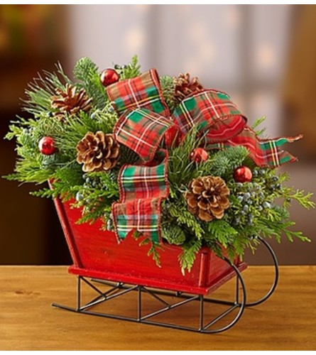 Christmas Sleigh with Fresh Evergreens