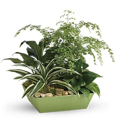 Teleflora's Forever Green Plant Garden