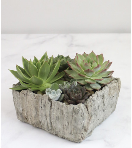 Splendid Succulents