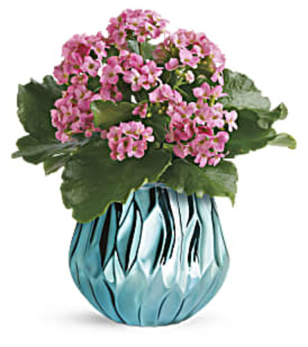 Blooming Gem Kalanchoe Plant