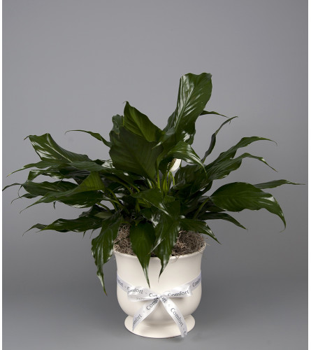 Sympathy Ceramic Planter