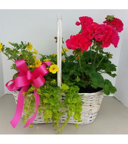 Basket of Springtime