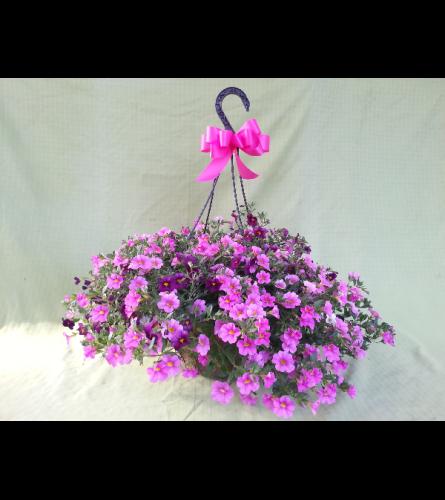 Sunny Flowering Hanging Basket of Fun!