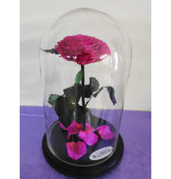 A Beautiful Preserved Pink Rose In Cloche Glass With Black Wo