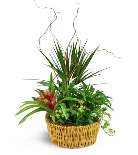Peace Lily Plant - Clarksville, TX Florist